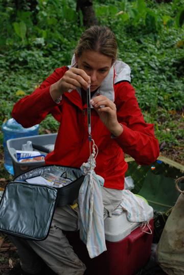 Rebecca Stirnemann weighing birds during capture. Photo by: Rebecca Stirnemann.