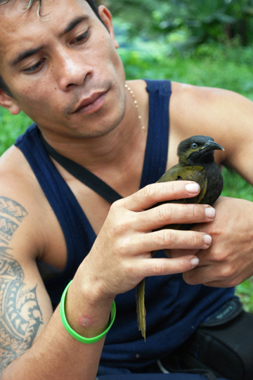 Fealele Enoka, field assistant, holding a Mao. Stirnemann says: 'he is an excellent tree climber. He free climbed to the Mao nests no ropes 26 meters. Working to inspire the future conservationists like him is one of my missions so that they can take over the ultimately run the projects.' Photo by: Rebecca Stirnemann.