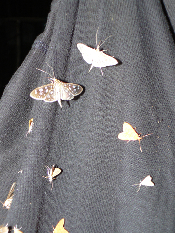 Moths congregating in Virachey. Photo by: Greg McCann.