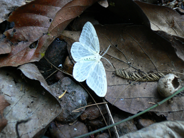 Unidentified insect on forest floor. Photo by: Greg McCann.