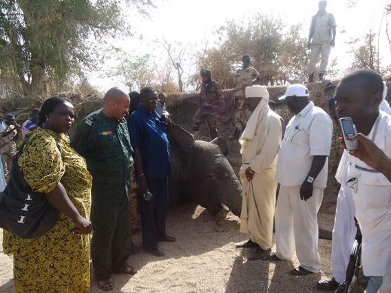 Funcionarios de pie junto al cuerpo de uno de los elefantes de las casi siete docenas salvajemente masacradas. Foto cortesía de SOS Elephants en Chad.