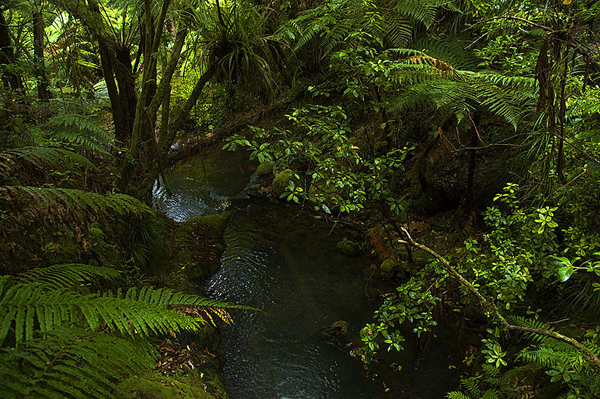 Rainforest on Coromandel Peninsula. Photo by: James Shook.