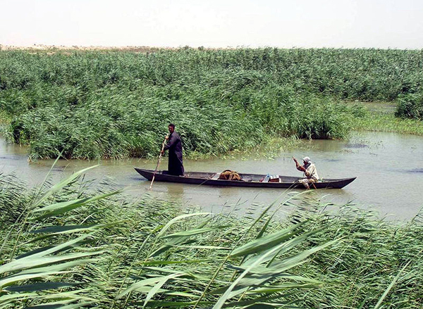 Marsh Arabs poling a traditional mashoof in the marshes of southern Iraq. Photograph slightly enhanced by contributor. April 2003. Photo by: Hassan Janali, U.S. Army Corps of Engineers.