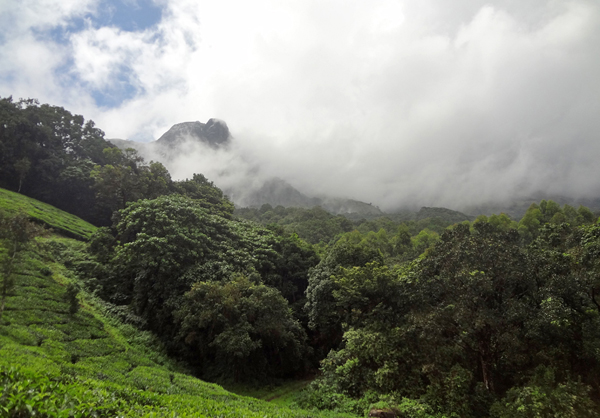 he southern Western Ghats, home to Beddomixalus and Mercurana. Photo by: Anil Zachariah.