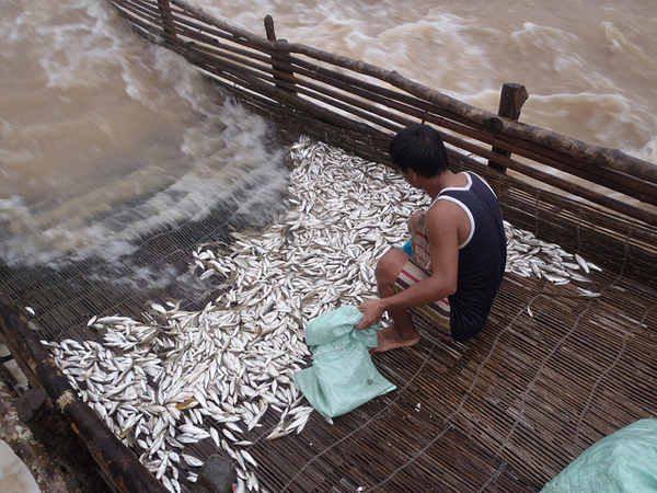 Fish trap in Lao PDR. Photo courtesy of FISHBIO.