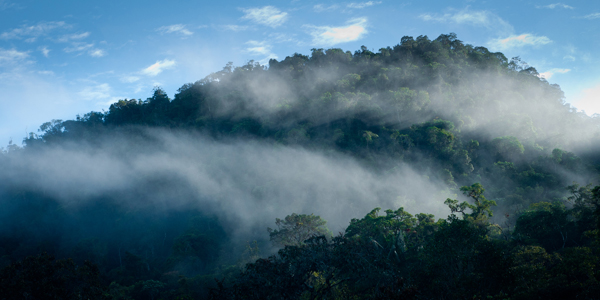 Cloud forest in Northeastern Peru. Photo by: Andrew Walmsley/NPC.