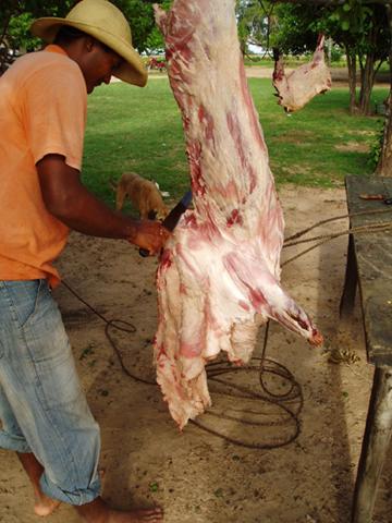 Un hombre extrayendo la grasa de cerdo. Esta foto es cortesía de Arnaud Desbiez.