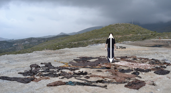 Person standing next to plastic debris found in sperm whale. Photo courtesy of de Stephanis, R., et al.