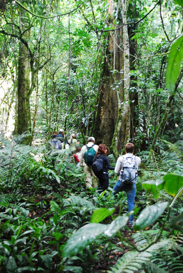 Trekking for mountain gorillas. Photo by: Anne-Marie Weeden.