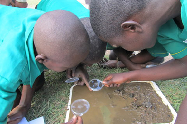 Students count macro invertebrates with the Cleveland Zoo Water Project. Photo courtesy of Elizabeth Ross.