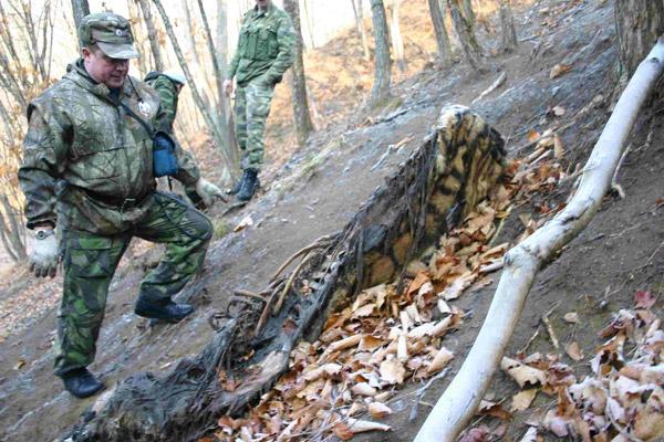 ロシア沿海州カサン地方で発見されたメスのアムールトラの死体を調べる、ロシア連邦密猟対策チームInspection Tigerのアンドレイ・ユーチェンコ氏。この個体は野生動物密売のためにトラ用のくくり罠で捕獲されたものの、罠の見回りがなされず、この場所で死んで腐敗したとみられる。写真:Inspection Tiger