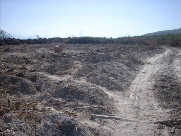 Tierra despejada en la Reserva Biológica Loma Charco Azul. Foto por: Grupo Jaragua.