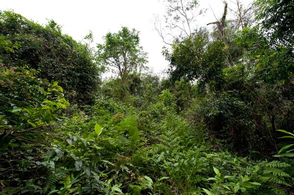 Bosque Atlántico en Paraguay.  El Boste Atlántico es uno de los bosques más amenazados de la tierra.  Foto de: Rolex Awards/Kirsten Holst.