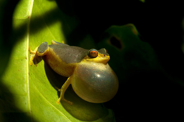 Amphibians essay writer