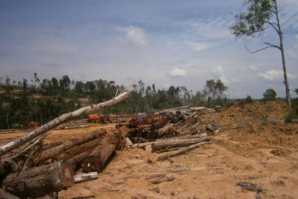 Reserva Florestal de Bikam desmatada. Foto: Meorrazak Meorabdulrahman.