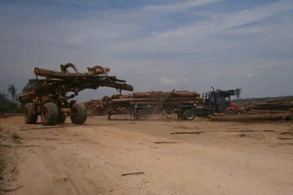 Machinery clearing away Bikam Forest Reserve. Photo by: Meorrazak Meorabdulrahman.