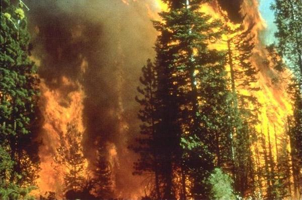 Incendies de forêts en Californie. On prévoit que l'accroissement de la sécheresse et les modifications pluviométriques consécutives aux changements climatiques vont être la cause d'incendies de forêts de plus en plus sévères dans certaines régions. Photo: Bureau de l'Aménagement du Territoire.