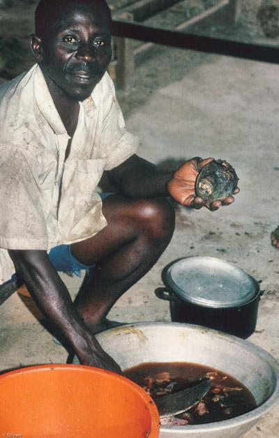 Esquartejamento de um colobus vermelho do Delta do Níger para ser colocado na panela. Sob a lei vigente, a caça da espécie é legal, apesar da condição de alto risco de extinção. Os habitantes locais sofrem com a pobreza devastadora e a destruição do ambiente. Foto de Noel Rowe.