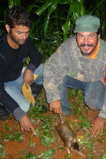 Nicolas Corona (right) and another field assistant with hand-caught solenodon. Photo by: Rosalind Kennerley.