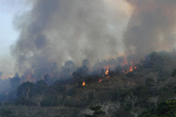 Forêt en feu en Nouvelle Calédonie. Photo : © Conservation International/photo de François Tron.