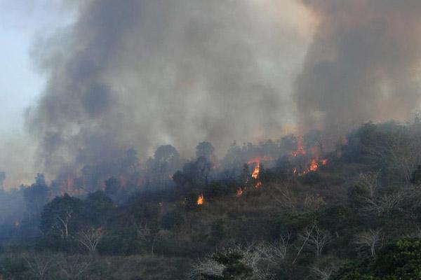 Bosque en llamas en Nueva Caledonia. Foto hecha por: ©Conservación Internacional/ foto hecha por François Tron.