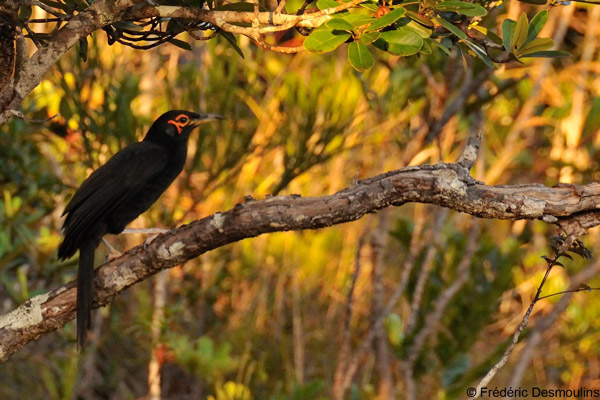 'Lost' bird rediscovered in New Caledonia along with 16 potentially new species