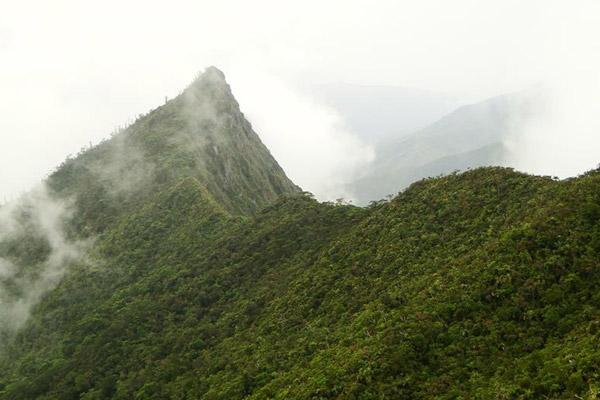 Encima de los 800 metros el bosque es a menudo envuelto en nubes. Foto hecha por: ©Conservación Internacional/ foto hecha por François Tron.