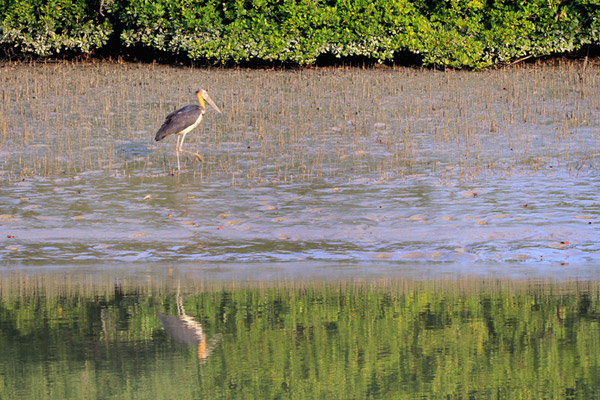 Stork in the Sundarbans. Photo by: Pranabesh Das.
