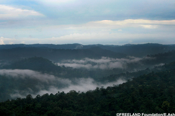 The vast forested landscape of Thap Lan National Park is home to some of Thailand's last remaining rosewood now threatened by intense illegal logging. Photo by: FREELAND Foundation/Eric Ash.