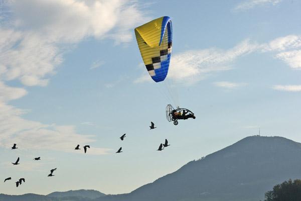 Gli Ibis eremita seguono gli scienziati sulla nuova rotta migratoria. Foto: Waldrappteam.