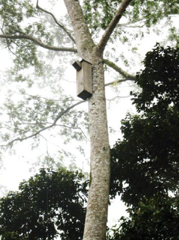 Nest box in Papua New Guinea. Photo courtesy of Warakai et al.