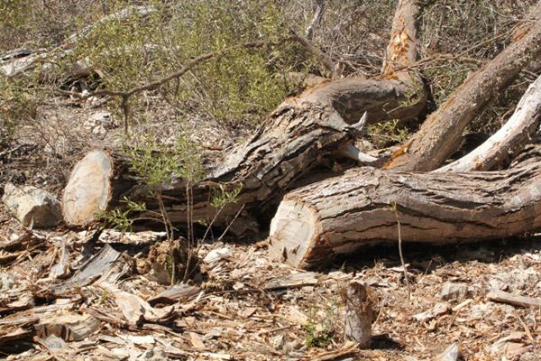 Deforestation in Madagascar. Photo by: Marni LaFleur.