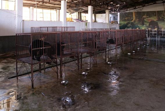 Bear cages in Möng La, Shan, Myanmar. Photo by: Dan Bennett.