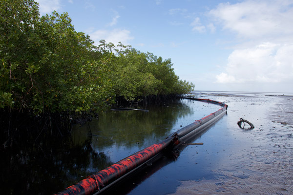 Clean up attempts in the mangroves. Photo by: Marc de Verteuil.