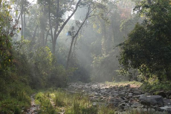 Sunlight streams through a riverine forest in Chitwan National Park. Photo by: Grzegorz Mikusinski.