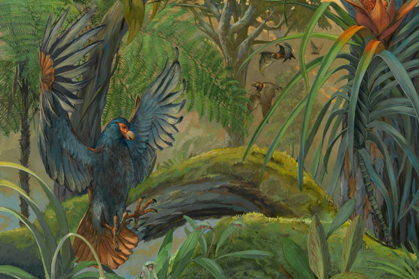 Detail of new painting showing off a little dodo in flight. Painting by: © Michael Rothman 2013.