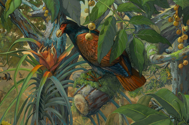 Detail of new painting highlighting the Manumea or little dodo. Painting by: © Michael Rothman 2013.