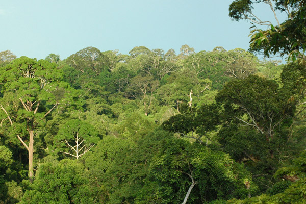 A logged forest can still be beautiful and have very high biodiversity values. Photo taken from a forest tower in Sungai Lesan in a former timber concession area in East Kalimantan. Photo by Ed Meijaard.