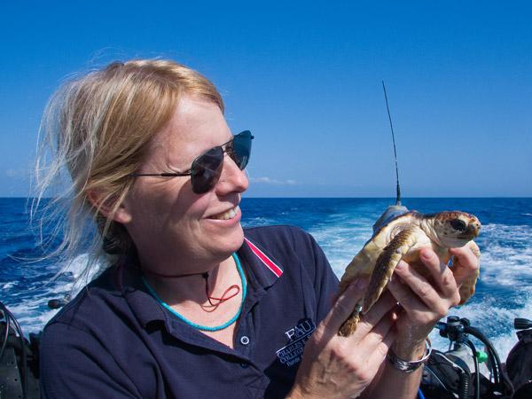 Jeanette Wyneken, colaboradora de la Universidad Atlántica de Florida sosteniendo una tortuga boba con transmisor satelital. Foto de: Jim Abernethy.