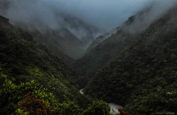 Where the Andes meet the Amazon. The cloud forests of Manu, where moisture collects, and pours towards the lowlands.  Photo by: Gowri Varanashi.