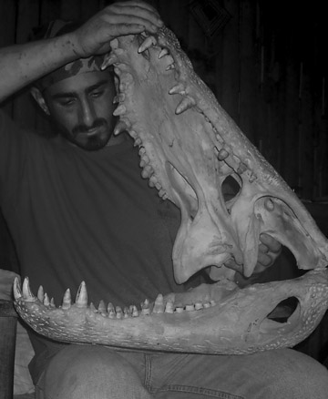 Rosolie with the skull of a full grown black caiman, an endangered species and the Amazon's largest predator. Photo courtesy of Paul Rosolie.