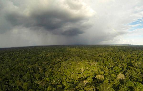 Rain over Yasuni National Park. Photo by: Carlos Pozo.