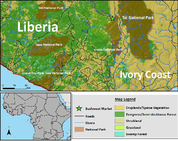 The location of the bushmeat market along the Ivory Coast/Liberia border. Hunting range indicated by yellow, diagonal lines. Map by: Ryan Covey.