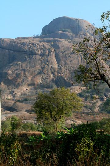 El sitio primordial en que  los buitres anidan en India. Muchos quedaron vacíos. Foto por: Morgan Erickson-Davis.