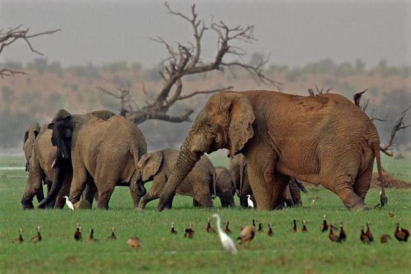 Elephants in Lake Banzena. Photo by: Carlton Ward Jr.