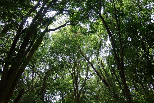 Forest at Tanjung Hantu. Photo by: Nadine Ruppert.