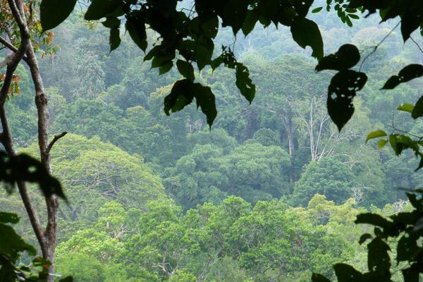 Tanjung Hantu Permanent Forest Reserve. Photo by: Nadine Ruppert.