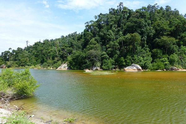 Tanjung Hantu Forest Reserve. Photo by: Nadine Ruppert.