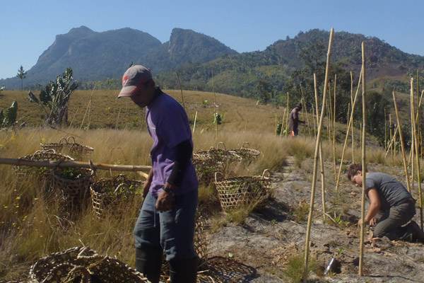 Viktor, a local Malagasy, and Tessa, an American volunteer, during a reforestation planting. Bamboo stakes mark seedlings. Photo by: Zach Fitzner.