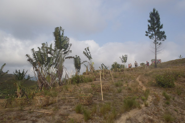 A reforestation site just as people are arriving to plant. Photo by: Zach Fitzner.